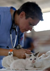 Vet and Kitten
