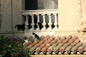 Cats on Balcony