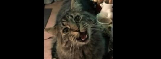 Erin's cat