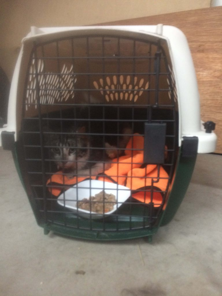 Feral Cat in Carrier